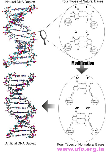 The first DNA molecule made almost entirely of artificial parts