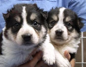 韩国科学家成功克隆BioArts生命科学公司社长的爱犬的图片