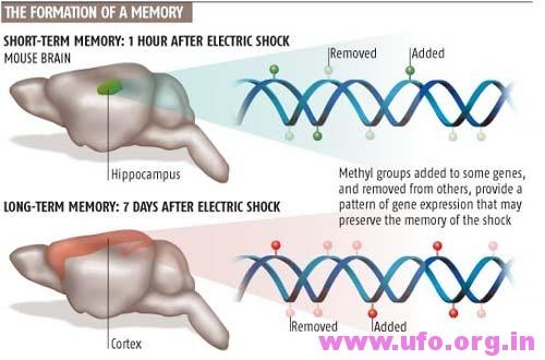 科学家们指出,记忆可通过DNA甲基化储存在你的DNA基因里的图片