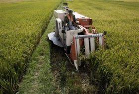 中国转基因水稻(转基因农作物)将产生第2次农业革命的图片