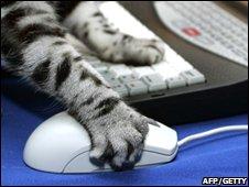 Cat n 第2张