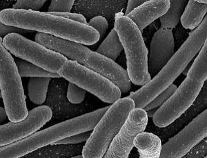 科学家们创造生物纳米机器人,具有遗传体的细菌的图片