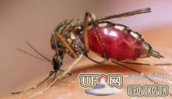 视频展示蚊子吸血可怕细节:口器灵活柔软的图片 第1张