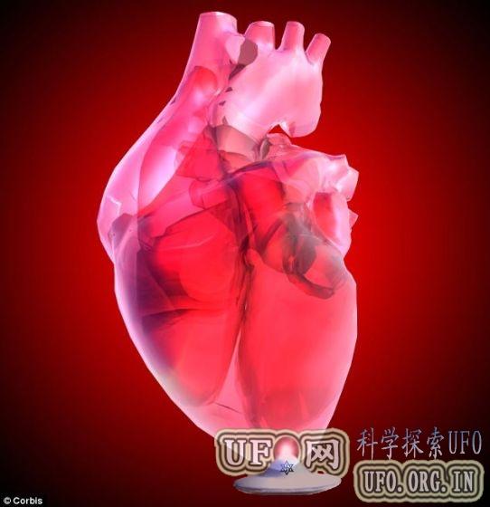 美科学家利用人体干细胞培育老鼠心脏的图片 第5张