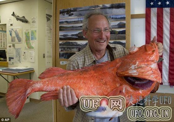 阿拉斯加渔民捕获18公斤重200岁大岩鱼(图)的图片 第1张