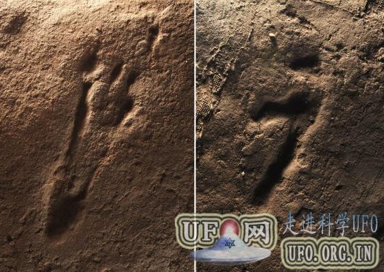 重庆发现中国最大翼龙足迹动物群遗址的图片 第2张