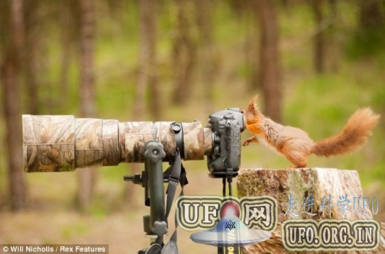 摄影师捕捉红松鼠摆弄相机搞笑瞬间(图)的图片 第1张