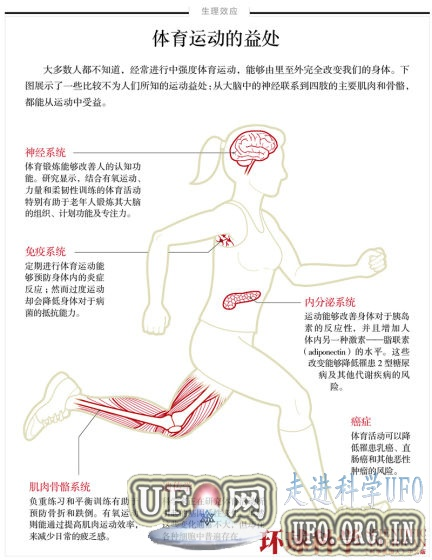 运动改造人体:提升大脑功能益处远超想象的图片 第2张