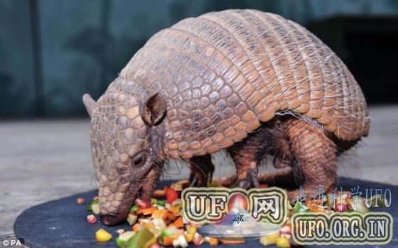中国发现哺乳动物祖先化石:年代早于霸王龙的图片 第3张