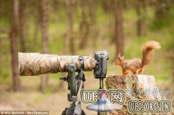 摄影师捕捉红松鼠摆弄相机搞笑瞬间(图)的图片 第2张