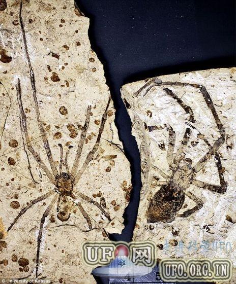 内蒙古发现罕见未知史前蜘蛛种群化石的图片 第2张