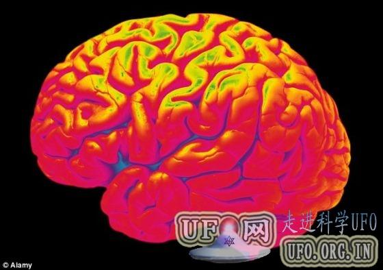 科学家描绘老鼠果蝇视神经 有助揭开大脑谜团的图片 第5张