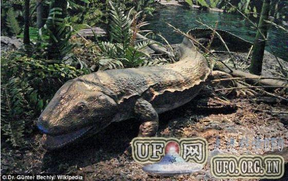 约3亿年前古老鳄鱼相互撕咬化石将拍卖的图片 第2张