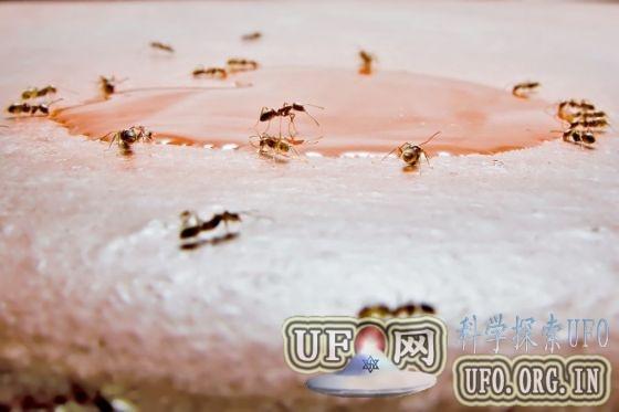 蚁群启发人类工程算法设计:结构精妙效率高的图片 第1张