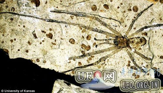 内蒙古发现罕见未知史前蜘蛛种群化石的图片 第1张