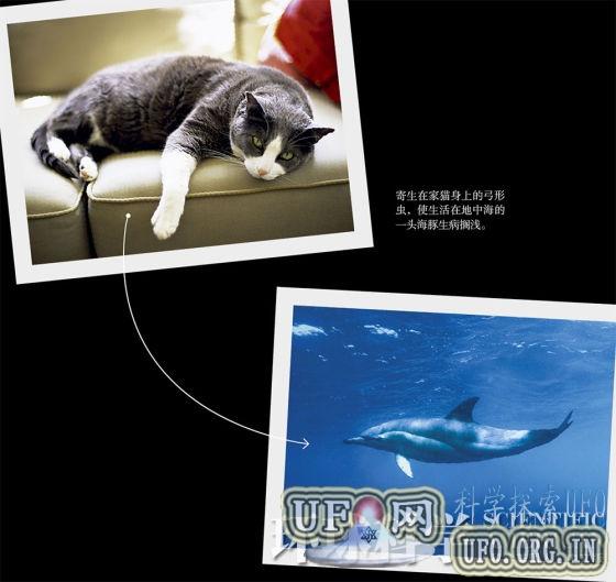 陆地疾病流入海洋:猫咪排泄物害死海豚的图片