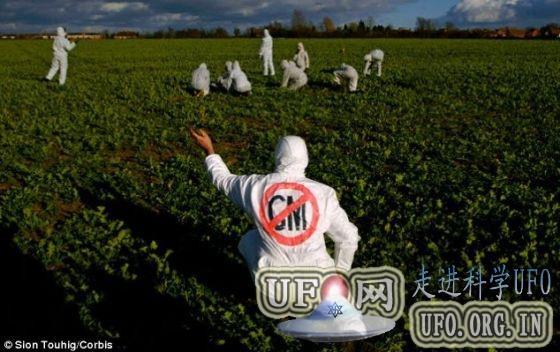 欧盟将批准商业种植转基因抗虫玉米 19国反对的图片 第2张