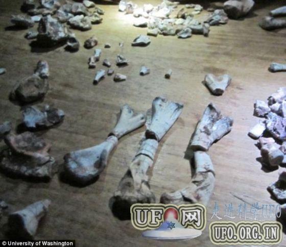 科学家发现大灭绝事件后恐龙祖先化石(图)的图片 第5张