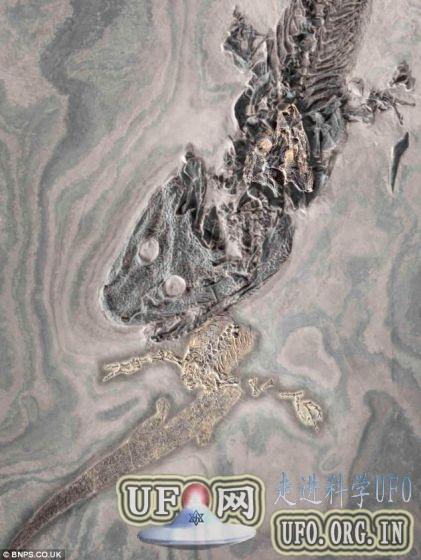 约3亿年前古老鳄鱼相互撕咬化石将拍卖的图片 第1张