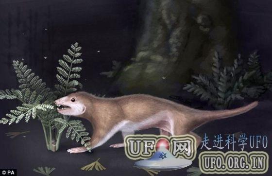 中国发现哺乳动物祖先化石:年代早于霸王龙的图片 第1张