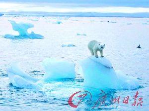 北极冰融损失或达60万亿美元的图片