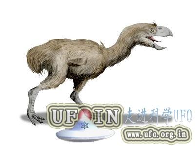 远古凶猛大鸟成顶级掠食者:高达3米钩状巨嘴的图片 第5张