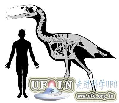 远古凶猛大鸟成顶级掠食者:高达3米钩状巨嘴的图片 第2张