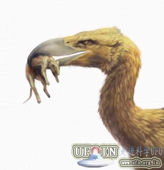 远古凶猛大鸟成顶级掠食者:高达3米钩状巨嘴的图片 第1张