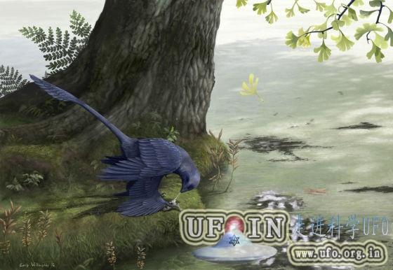 辽宁省发现飞行恐龙化石:鸽子大小会吃鱼的图片 第1张