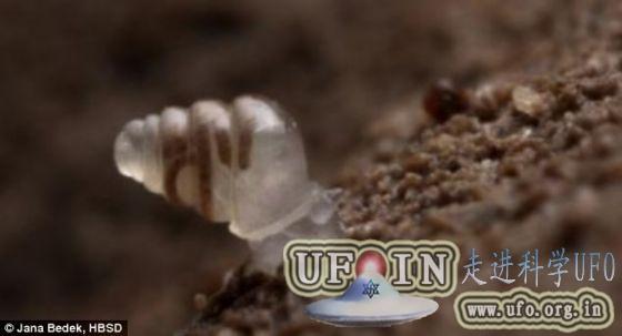 克罗地亚最深洞穴发现贝壳透明蜗牛(图)的图片 第2张