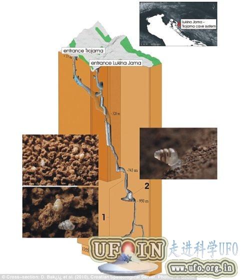 克罗地亚最深洞穴发现贝壳透明蜗牛(图)的图片 第3张