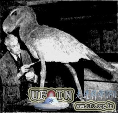 远古凶猛大鸟成顶级掠食者:高达3米钩状巨嘴的图片 第4张