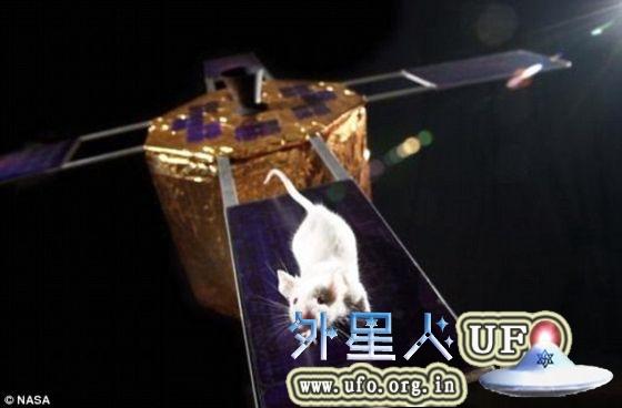 转基因老鼠入住国际空间站助揭示衰老秘密的图片