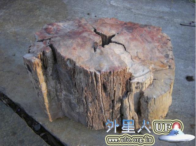 科学家发现二亿年前的木化石