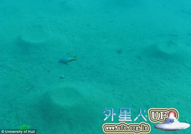 """科学家在水下发现鱼类建造的神秘""""建筑"""""""