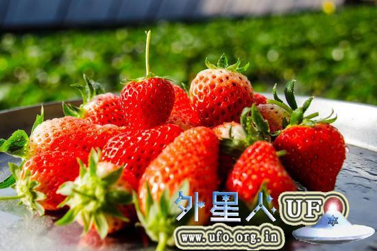 1月科学流言榜:吃草莓等于慢性自杀?的图片 第1张