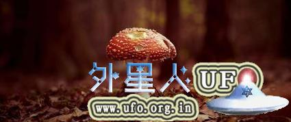 1月科学流言榜:吃草莓等于慢性自杀?的图片 第2张