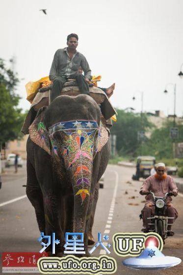 印度拉贾斯坦邦斋浦尔市,当地人骑着大象走在街头(2014年8月31日摄)。 第1张