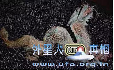揭开中国龙和玛雅人羽蛇神的未解之谜的图片 第3张
