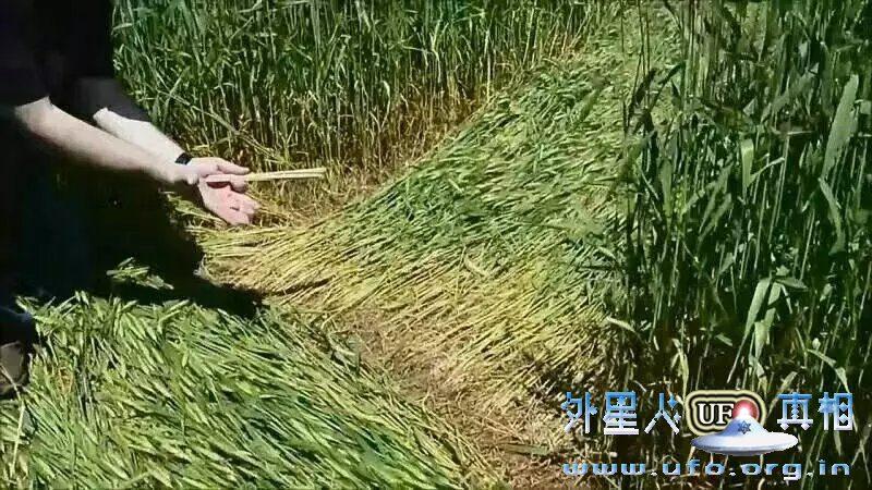 9-baxi-mai-tian-quan-2016-9-21 第9张