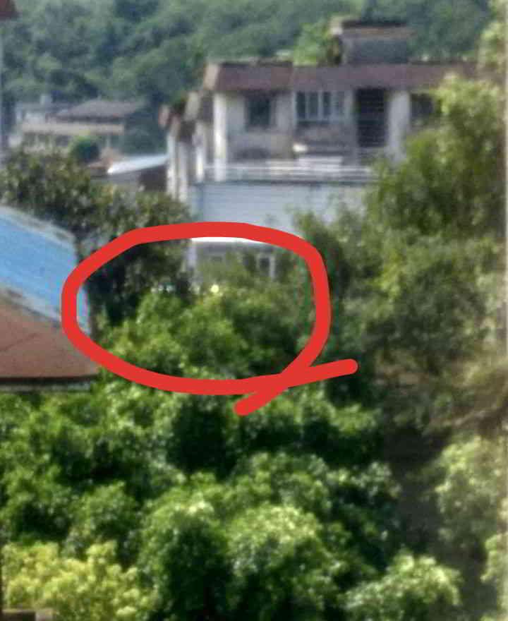 UFO在树木上方 2 第4张