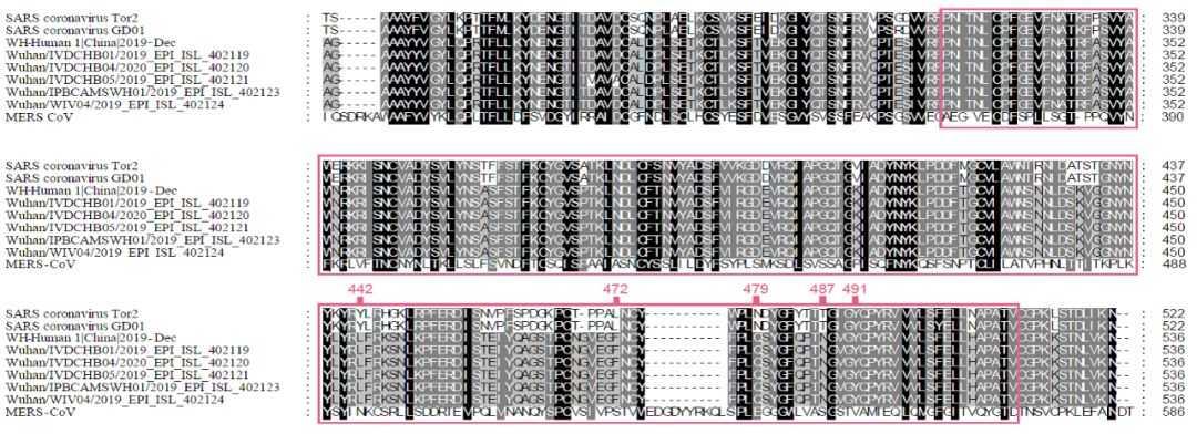 武汉新型冠状病毒,虽然换掉了4个关键蛋白, 但是与人ACE2的亲和力还是很强。 第3张
